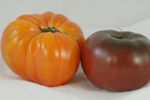 Den bästa släktklenod tomat växter att växa i behållare