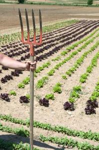 Hemgjorda organiska vegetabiliska gödselmedel