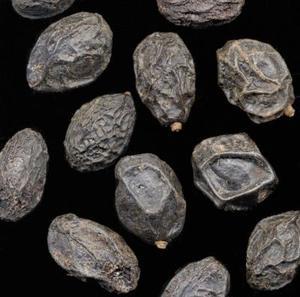Skillnader mellan saw palmetto extrakt & Sågpalmetto berry
