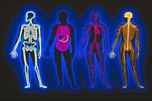 Online anatomi & fysiologi spel