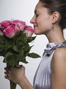 Hur sprider Rose Graftings och sticklingar
