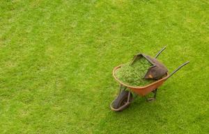 Den genomsnittliga kostnaden för Lawn Service