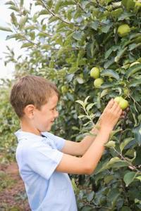 Hur nära Plant fruktträd för beskärning