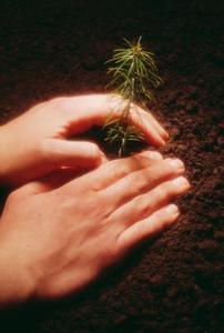 Trädplantor som gåvor