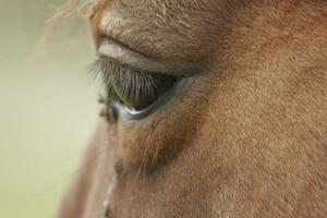 Typer av Viral ögoninfektion