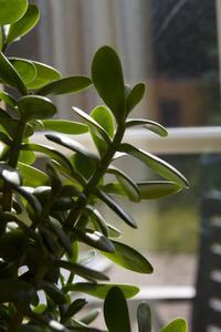 Knott och krukväxter