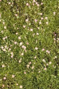 Hur man stoppar gräs växer i torv