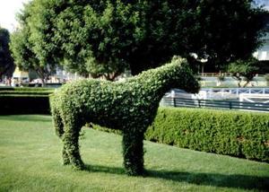 Vad slags verktyg behövs för att göra Topiary?