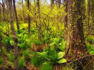 Utrotningshotade växter i barrskogar