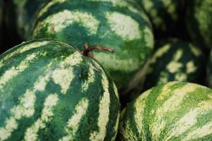 Vattenmelon växter & Salt vatten