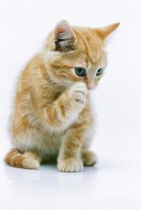 Hur till stopp din kattunge från repor och biter du