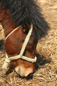 Orsaker till hosta & snuva hos hästar