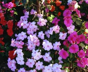 Krukväxter för en skuggig veranda