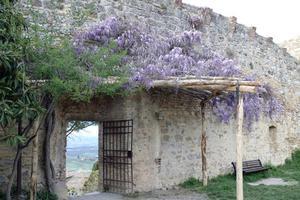 Användningsområden för lila buskar