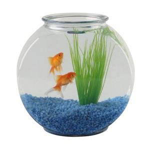 Hur man rengör en Fish Tank efter återförslutning