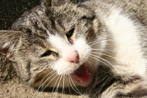 katt förstoppning olivolja