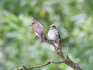 Hantverk leveranser att göra konstgjorda fåglar