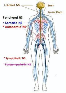 Hur man identifierar dysautonomia
