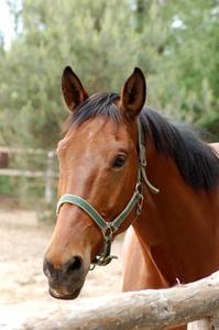 Definition av Sebaceous cystor i hästar