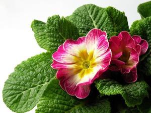 Lista över brittiska blommor