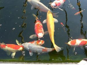 Hur till identifiera små fiskar
