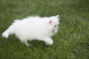 Hur man behandlar en kattens hår faller