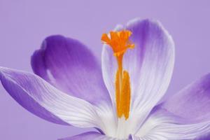 Hur kan man kontrollera pollen i ditt område
