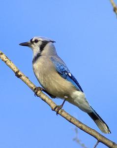 Vild fågel identifiering