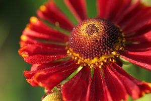 Blommor som blommar i slutet av juli