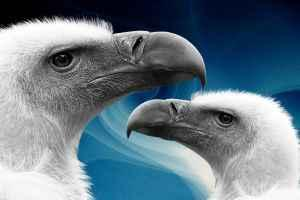 Vilken sorts mat äter olika fåglar?