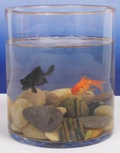 Hur man gör 3D Fish Tank landskap