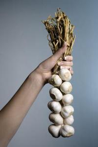 Kan du plantera grodda vitlök?
