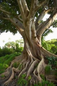 Snabbt växande träd för små trädgårdar