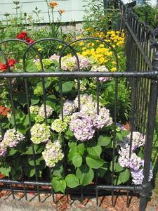 Sun älskande perenna växter