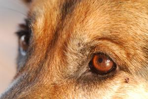 Aktuell antibiotika för hundar