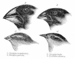 Teorier om biologisk Evolution