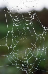 Hur man gör en falska spindelnät