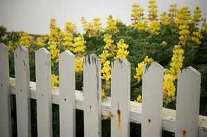 Hur man målar ett staket