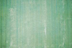 Ta bort tapeter från omålad gipsvägg