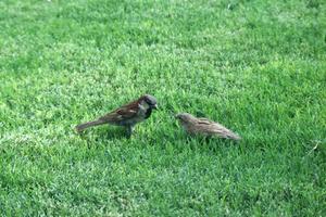 Hur man stoppar fåglar från att äta gräsfrö