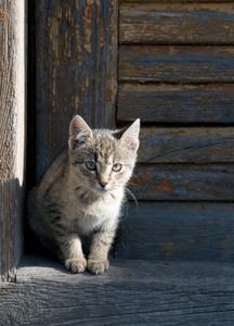 Utomhus staket för katter