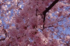 Cherry Blossom mittpunkten idéer
