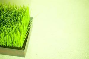 Effekten av destillerat vatten på katten gräs