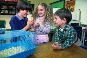 Hur till omsorg for en hamster med våt svans