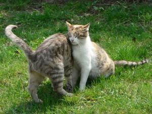 Katt motbjudande örter
