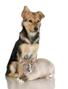 Vinyl vs laminatgolv med husdjur