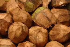 skala kokosnöt