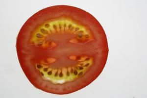 Hur snabbt tomat frön växa?