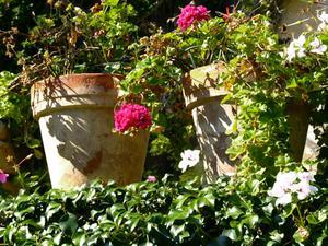 Vilken effekt har klorerat vatten på växter?