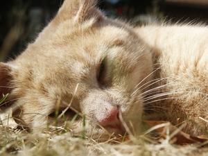 Vad är de sista symtom på njursvikt hos katter?